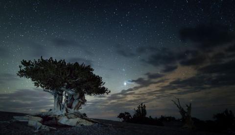 Bristlecone night sky- NPS